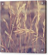 Swaying In The Soft Summer Breeze Acrylic Print