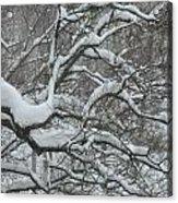Swedish Winter Acrylic Print
