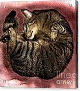Sweet Dreams 2 Acrylic Print