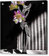 Sweet Light Acrylic Print