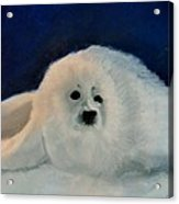Sweet Little Winter Seal Pup Of My Soul Acrylic Print