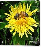 Sweet Nectar Acrylic Print by The Kepharts