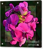 Sweet Pea Pop Out Photoart Square Acrylic Print