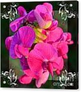 Sweet Pea Pop Out Square Acrylic Print