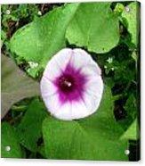 Sweet Purple Flower Acrylic Print by Juliana  Blessington