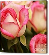 Sweet Roses Acrylic Print