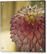 Sweet Shot Acrylic Print