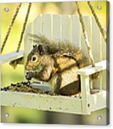 Swingin Squirrel Robber Acrylic Print