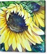 Swingin' Sunflowers Acrylic Print