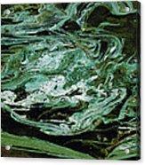 Swirling Algae Acrylic Print