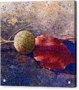 Sycamore Ball And Leaf Acrylic Print