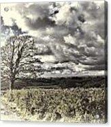 Sycamore Tree Cream Acrylic Print
