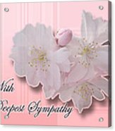Sympathy - Cherry Blossoms Acrylic Print