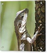 Ta-ta Lizard Acrylic Print