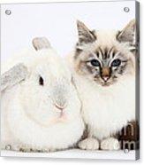 Tabby-point Birman Cat And White Rabbit Acrylic Print