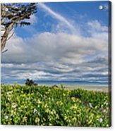 Table Bluff In Spring Acrylic Print