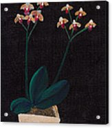 Table Orchid Acrylic Print