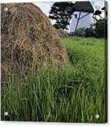 Tacumshane Windmill, County Wexford Acrylic Print