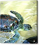 Tag Along Turtle Acrylic Print