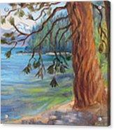 Tahoe Light Sugar Pine Point State Park Acrylic Print