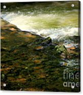 Beautiful River Acrylic Print