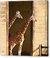 Taking A Look Acrylic Print by Bob and Nancy Kendrick