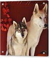 Takoda And Alaska In The Fall Acrylic Print