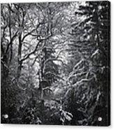 Tale Of The Trees Acrylic Print by Akos Kozari