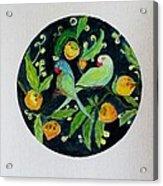 Talkative Parakeets Acrylic Print