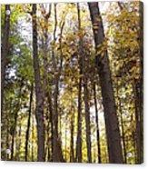 Tall Fall Trees Acrylic Print