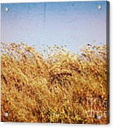 Tall Grass In The Wind Acrylic Print