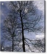 Tall Silhouetted Trees Acrylic Print