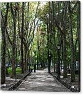 Tall Trees Of Madrid Acrylic Print