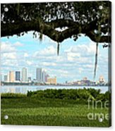 Tampa Skyline Through Old Oak Acrylic Print