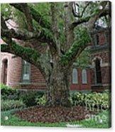 Tampa Tree  Acrylic Print