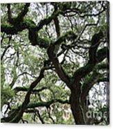 Tampa Trees Acrylic Print