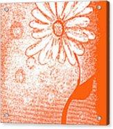 Tangerine Daisy By Shawna Erback Acrylic Print