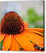 Tangerine Summer Acrylic Print