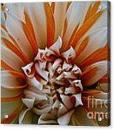Tangerine Tinged Acrylic Print
