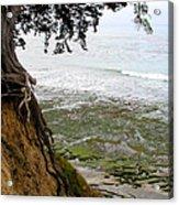 Tangled Overlook Acrylic Print