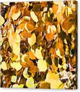 Taos Gold Iv Acrylic Print