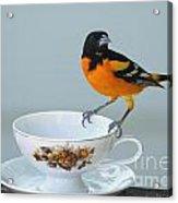 Tea Please Acrylic Print
