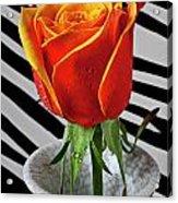 Tea Rose In Striped Vase Acrylic Print