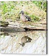 Teal Duck Standing On A Log Acrylic Print