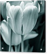 Teal Luminous Tulip Flowers Acrylic Print
