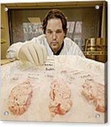 Technician Examines Human Brain Sections Acrylic Print
