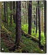 Temperate Rain Forest, Carmanah-walbran Acrylic Print