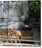 Temple Dog And Buddha Acrylic Print