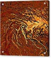 Tendrils2 Acrylic Print