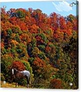 Tennessee Fall Acrylic Print
